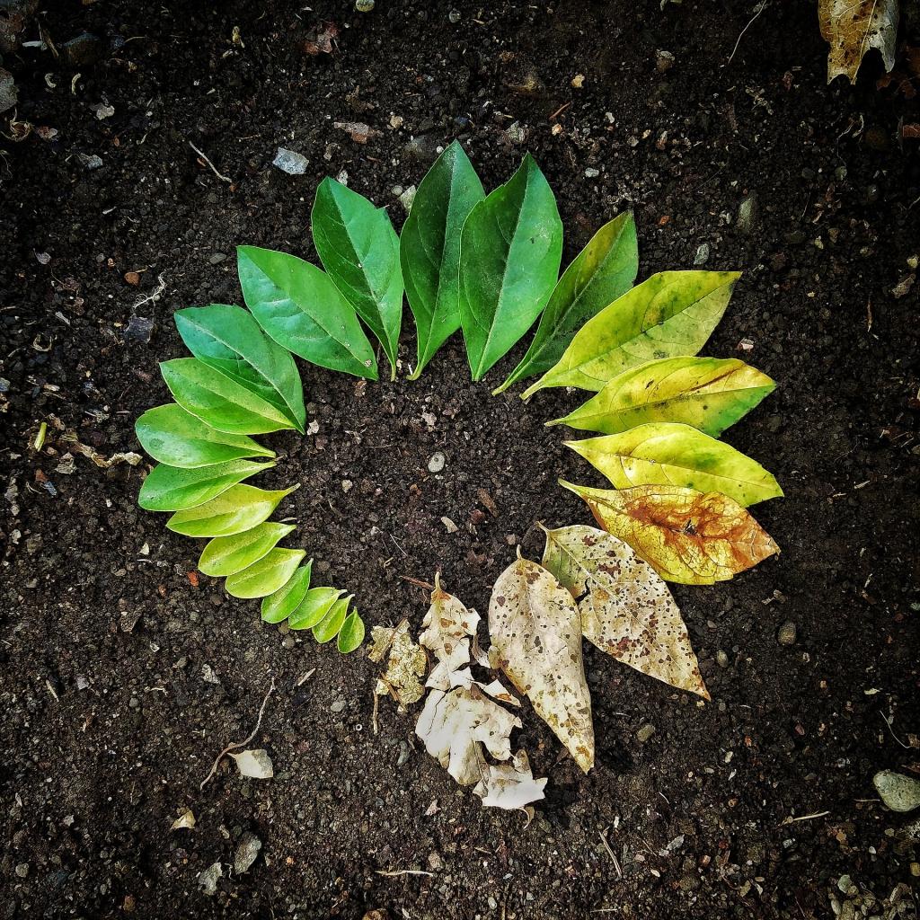 leaf-3341897_1920