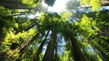 386 millió év: egy elhagyatott kőbányában találták meg a világ legöregebb fáit