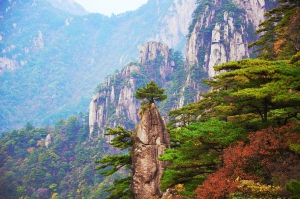nature-wood-mountain-landscape-tree-huangshan