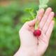A kertészkedés jót tesz a léleknek – állítják a kutatók
