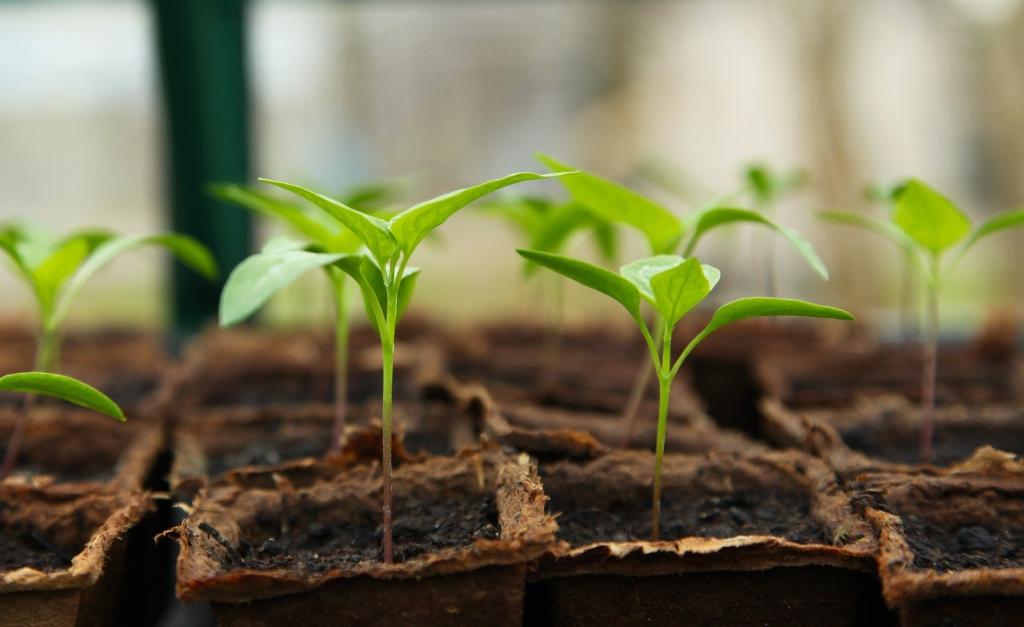seedling-5009286_1920