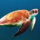 A víz alatti turizmus megnyitja az óceánok világát az utazóknak