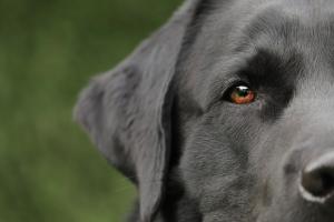 dog-4765784_1920